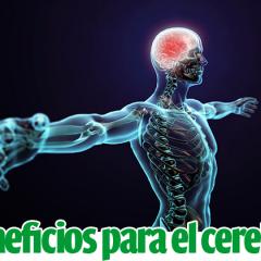 Efectos beneficiosos del ejercicio físico sobre el cerebro